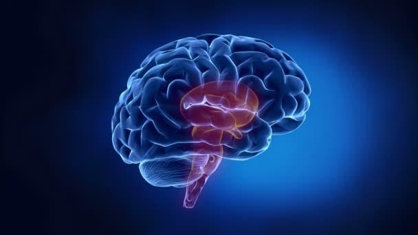 lidský mozek díly