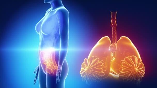 ženské orgány anatomie