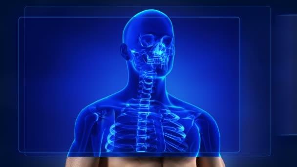 lidská kostra skenování