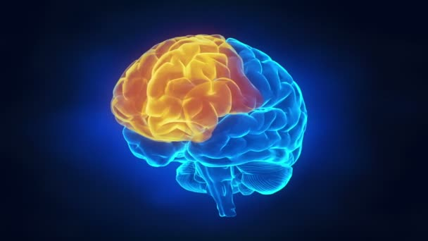 menschliche Gehirn teilen