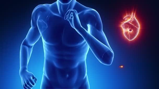 szívverés koncepció a fitness