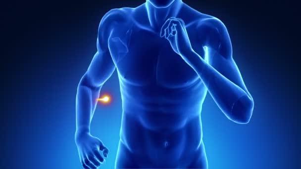 běžící muž se srdcem porazil puls