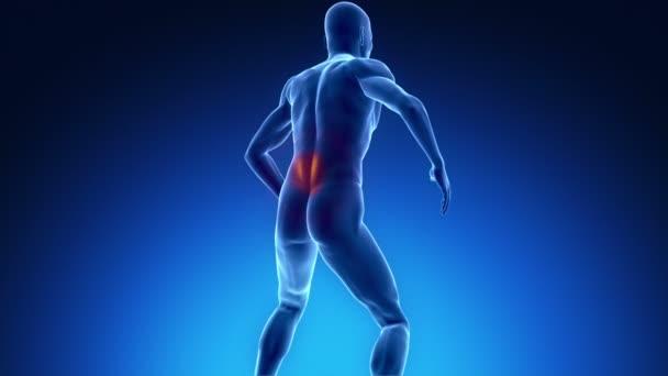 bolesti zad v rentgenové zobrazení