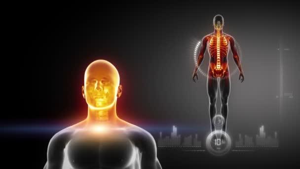 lidské tělo x-ray skenování ve smyčce