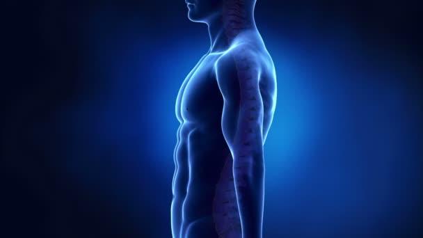 Regione intervertebrale della colonna vertebrale