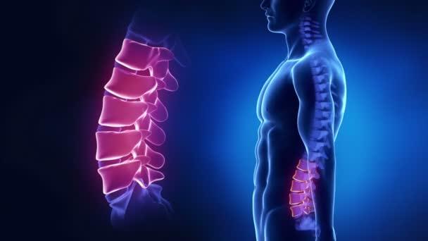 Regione lombare della colonna vertebrale