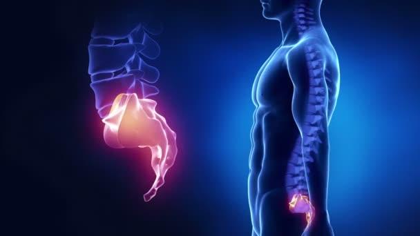 Regione sacrale della colonna vertebrale