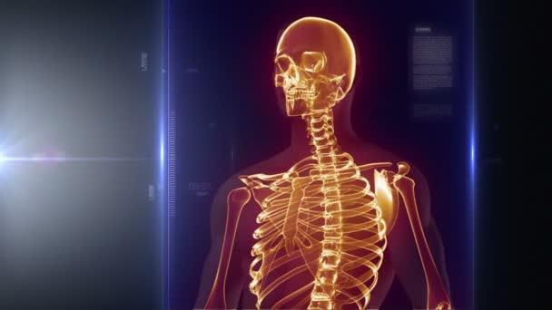 lidské tělo lékařské x-ray skenování