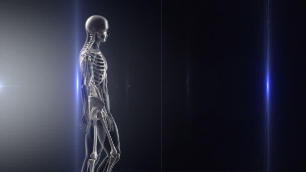 X-ray chůze