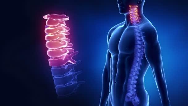 Regione cervicale della colonna vertebrale