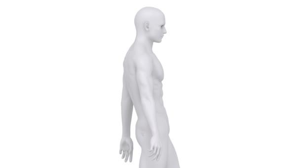 Chodící muž s páteře scan