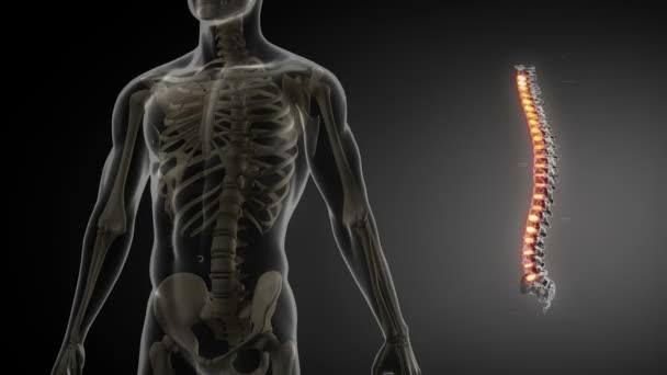 Páteř anatomie lékařské kontroly