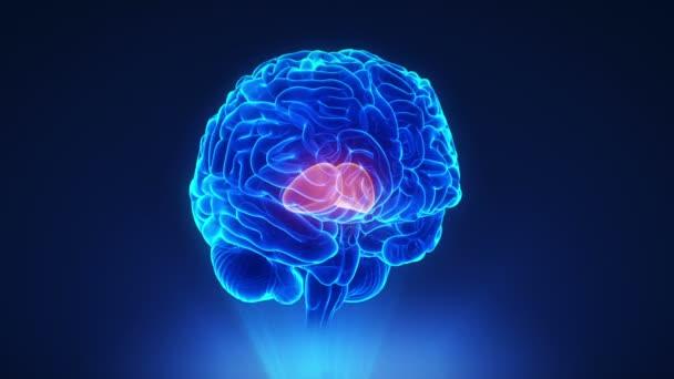 Right thalamus in brain