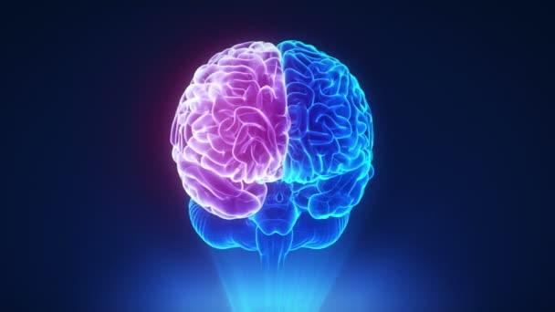 Pravá hemisféra smyčky mozku koncepce