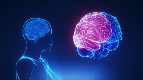Ženské thalamu v mozku