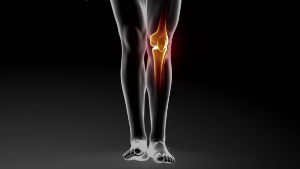Krém z kůže, léčení kolenních kloubů