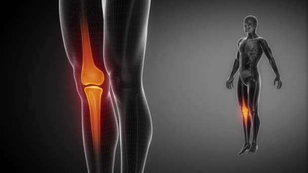 Knie-Knochen-Skelett — Stockvideo © CLIPAREA #68603977
