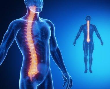 SPINE bones anatomy scan