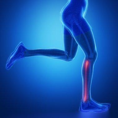 Running male leg scan