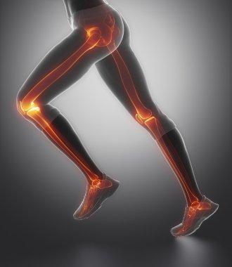 leg's bones anatomy