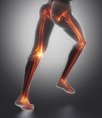 Leg bones anatomy