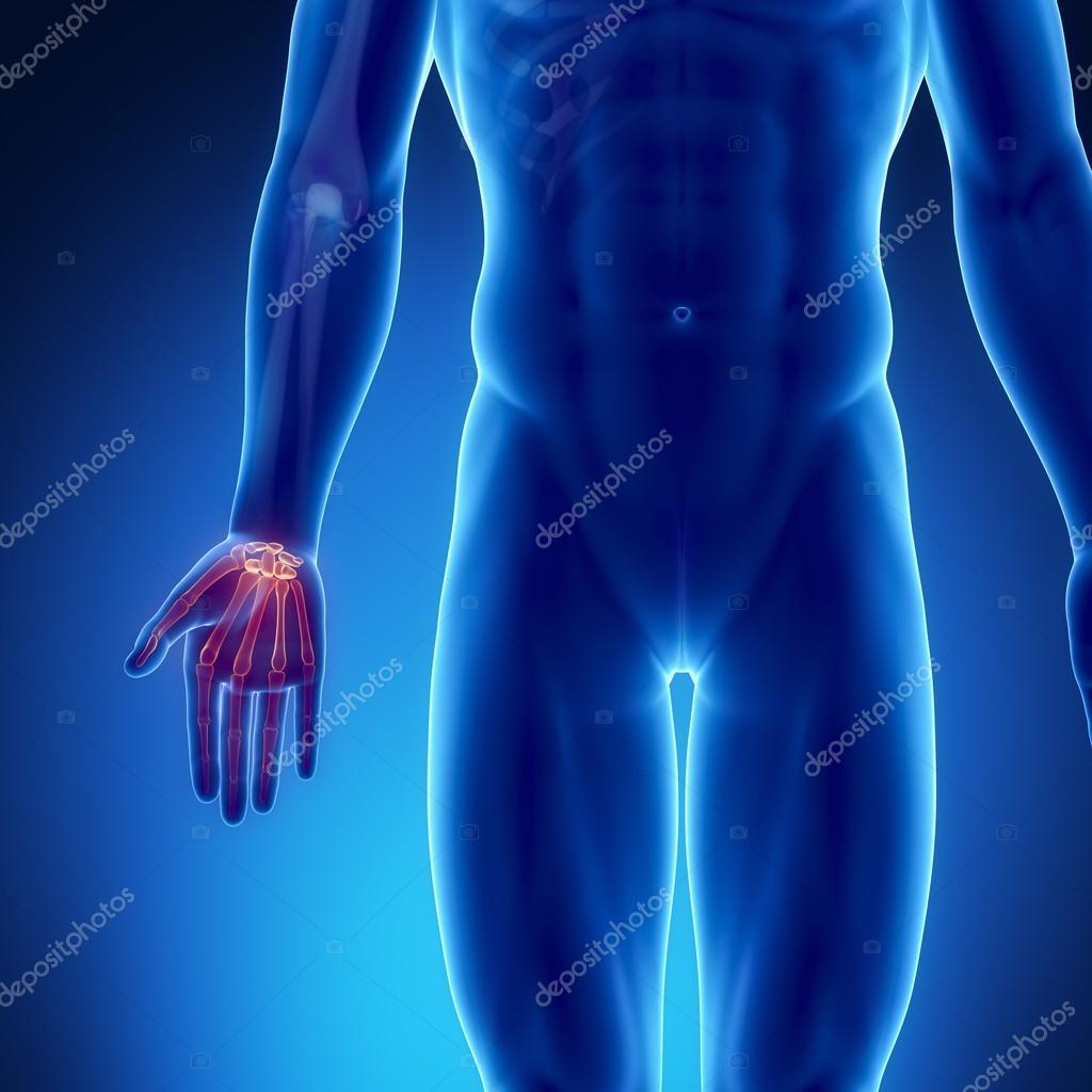männlichen Knochen Anatomie — Stockfoto © CLIPAREA #74136315