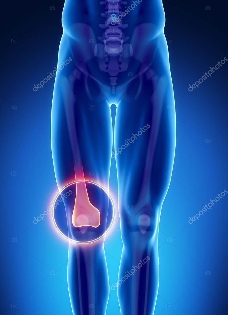 männlichen Knochen Anatomie — Stockfoto © CLIPAREA #74136329