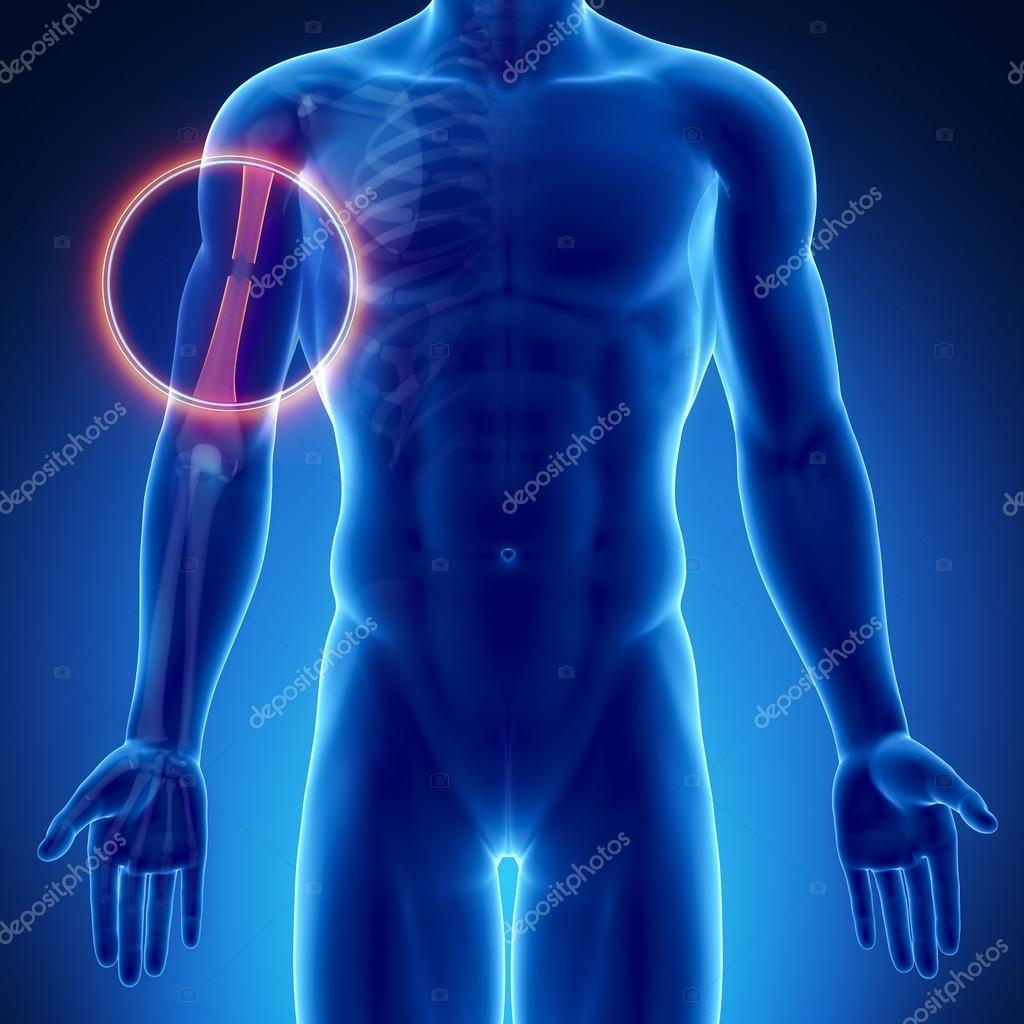 Anatomía ósea masculina — Fotos de Stock © CLIPAREA #74136467
