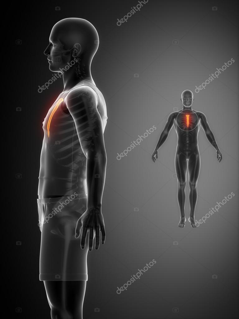 Brustbein Knochenscan — Stockfoto © CLIPAREA #74136663