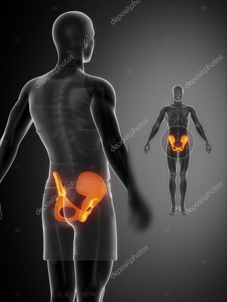 PELVIS bones anatomy x-ray scan — Stock Photo © CLIPAREA #74136707