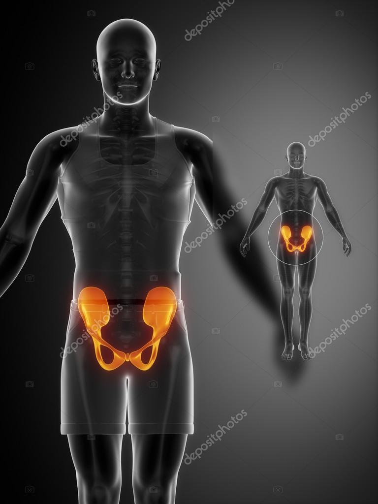 Pelvis Bones Anatomy X Ray Scan Stock Photo Cliparea 74136753