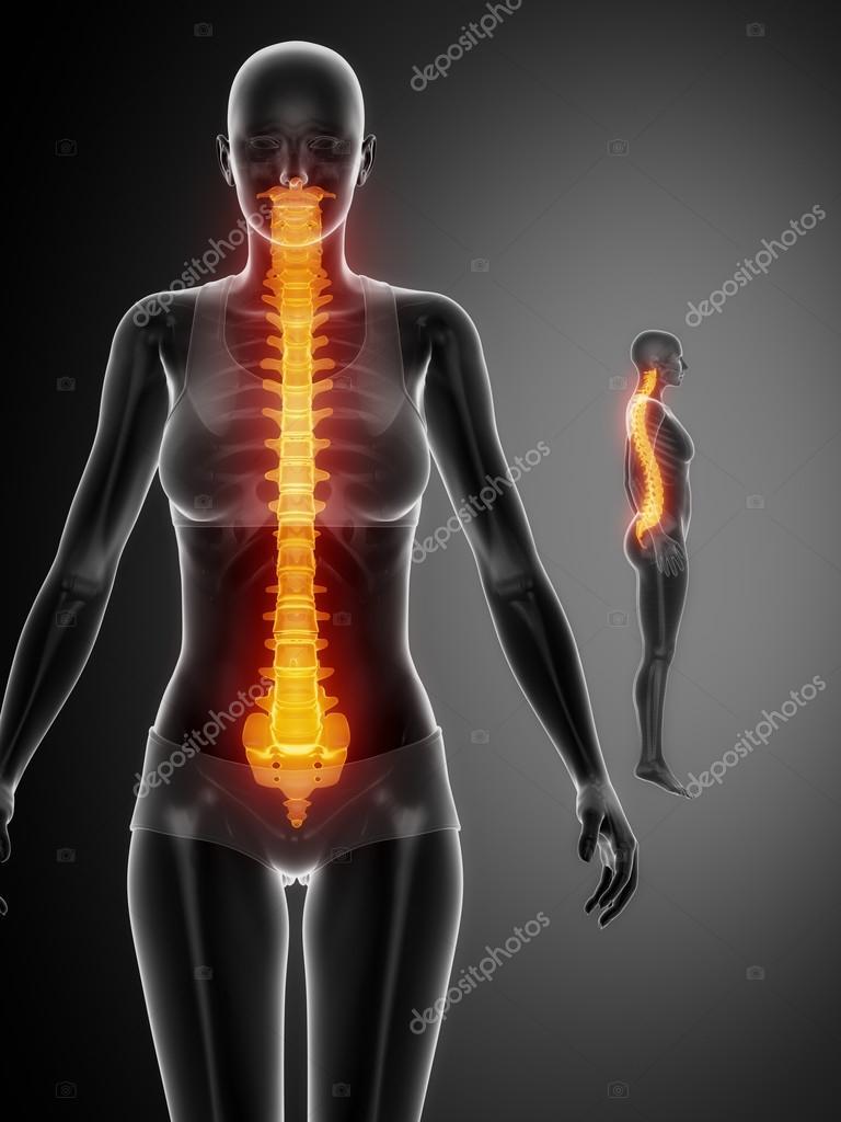 Spine Bones Scan Stock Photo Cliparea 74136975