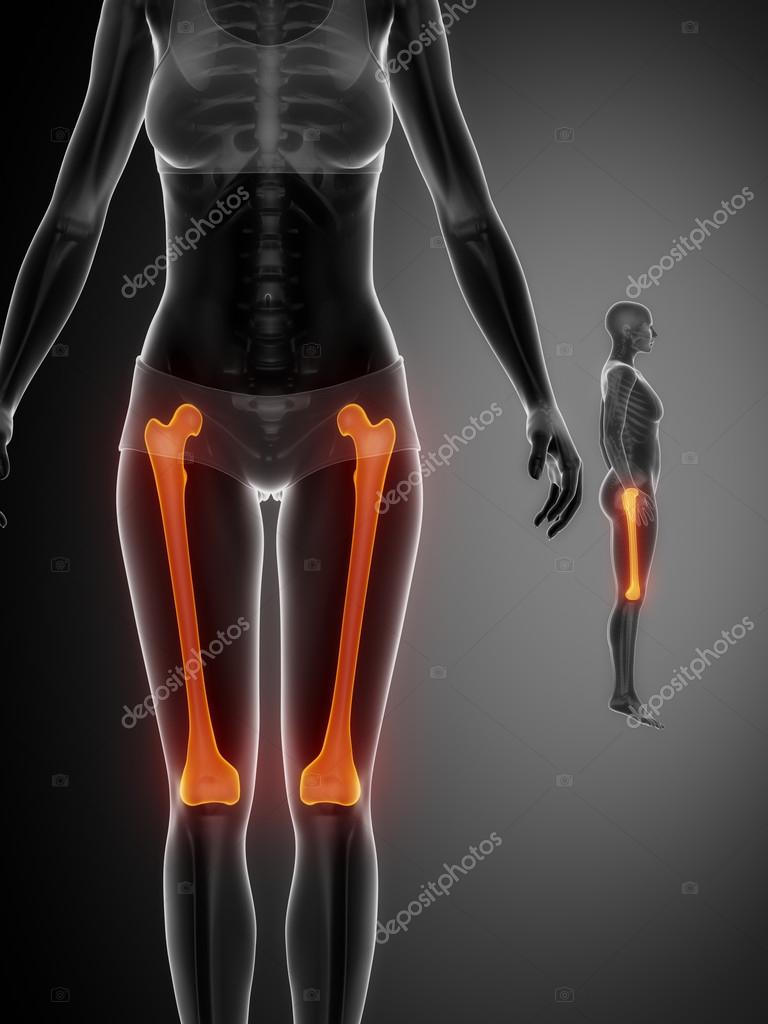 Femur Bones Scan Stock Photo Cliparea 74136989