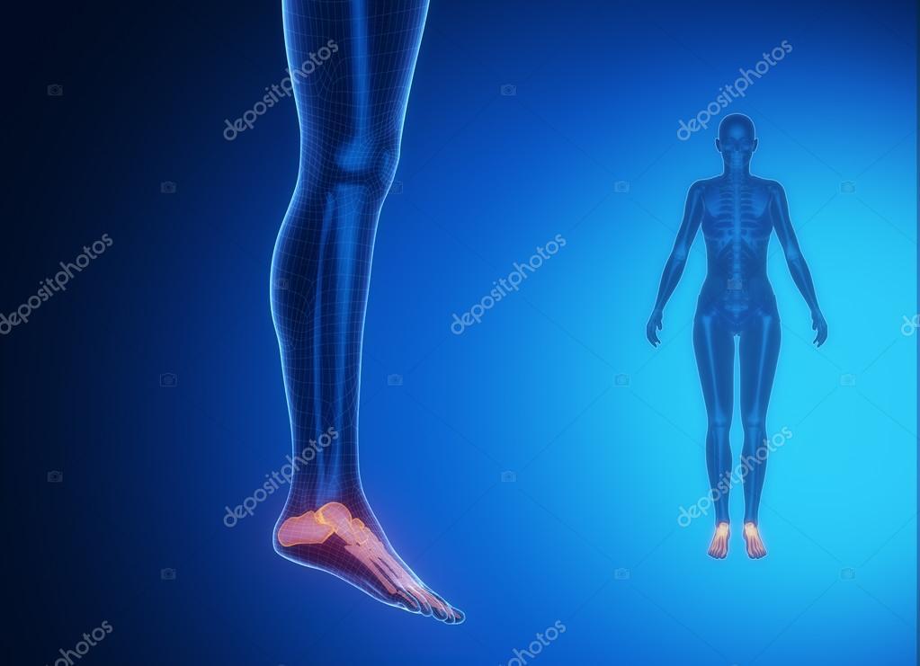 exploración de los huesos del tobillo — Fotos de Stock © CLIPAREA ...