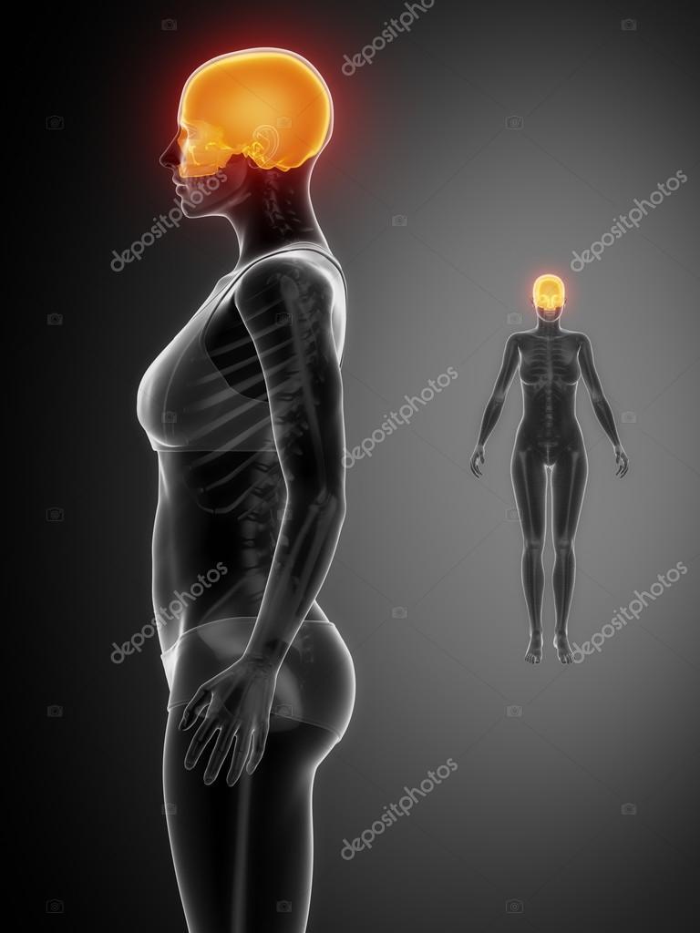 CRANIUM x--ray bone scan — Foto de stock © CLIPAREA #74137267