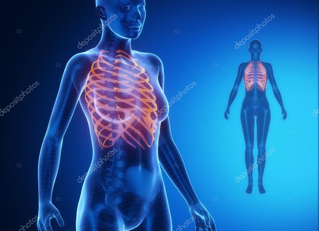 Die Rippen Röntgen - Knochen-Scan — Stockfoto © CLIPAREA #74137501
