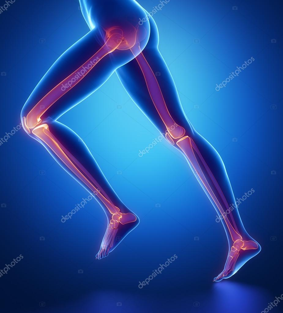 Focused On Leg Bones Anatomy Stock Photo Cliparea 74137655