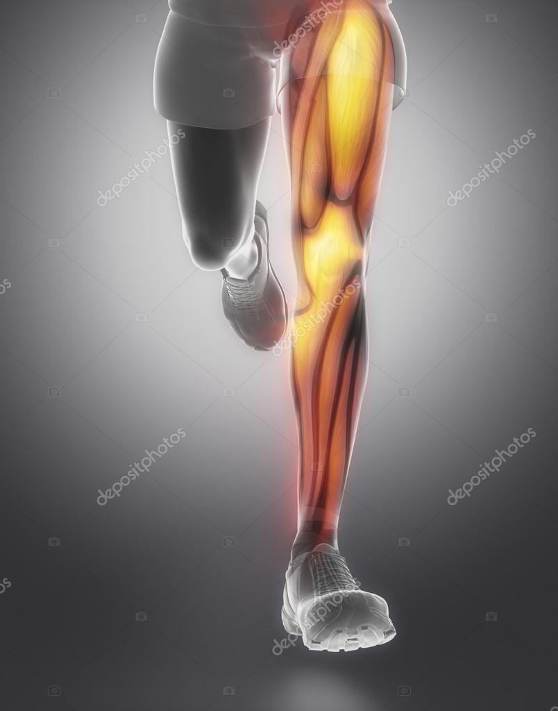 anatomía del músculo de la pierna — Foto de stock © CLIPAREA #74137727
