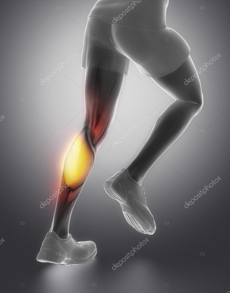 Anatomía del músculo de terneros — Fotos de Stock © CLIPAREA #74138139