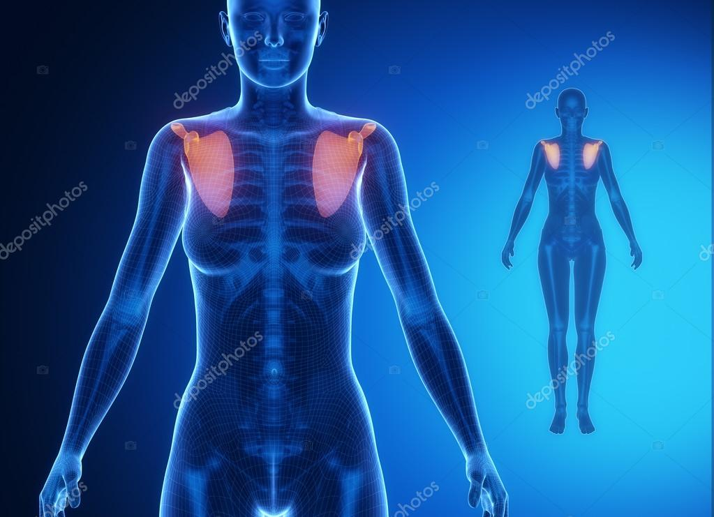 cuerpo de la mujer con la exploración del hueso del omóplato — Fotos ...