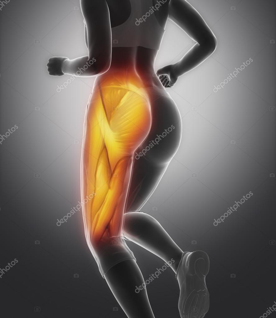 Anatomía del músculo de muslo femenino — Fotos de Stock © CLIPAREA ...