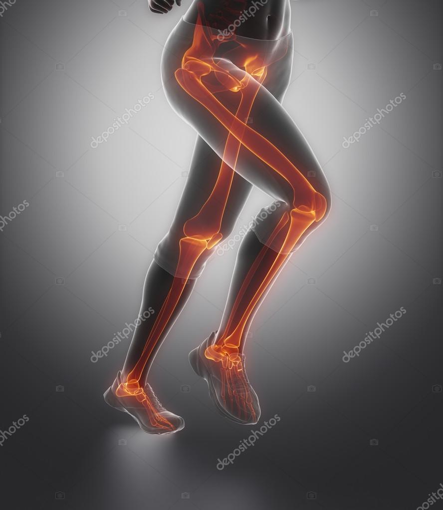 Leg Bones Anatomy Stock Photo Cliparea 74138407