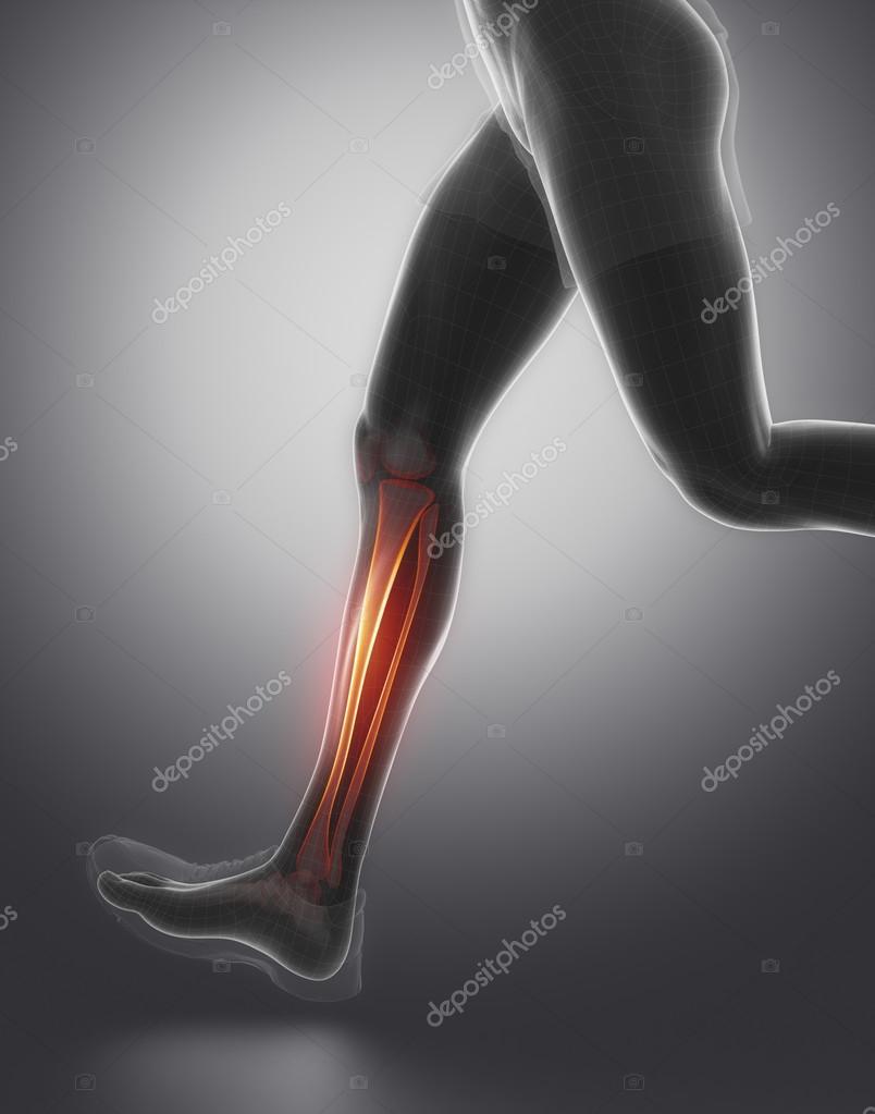 Läuft Man mit Tibia-Fibula-Anatomie — Stockfoto © CLIPAREA #74138485
