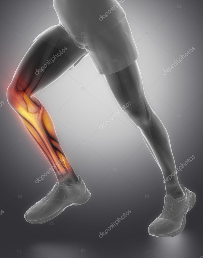 Anatomía del músculo de terneros — Foto de stock © CLIPAREA #74138587