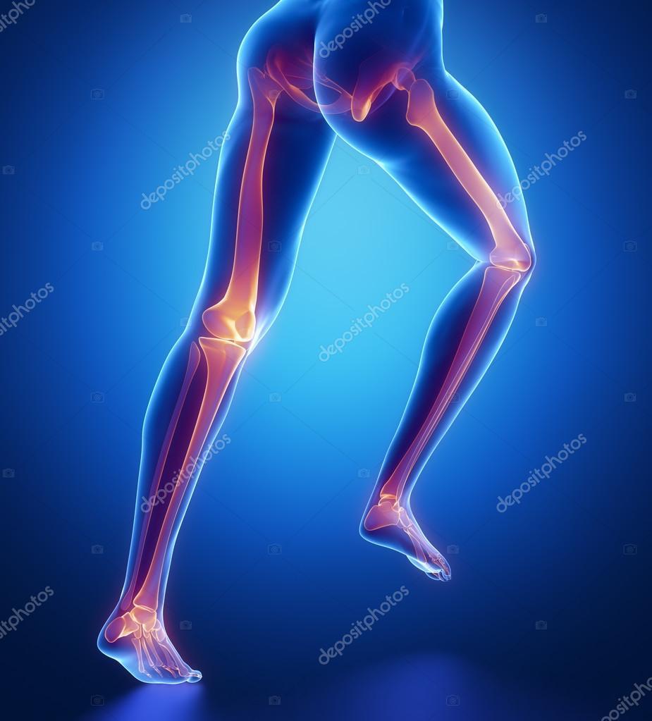 Anatomía de los huesos de la pierna — Foto de stock © CLIPAREA #74138677