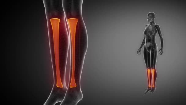 Holenní kosti kostry x-ray skenování