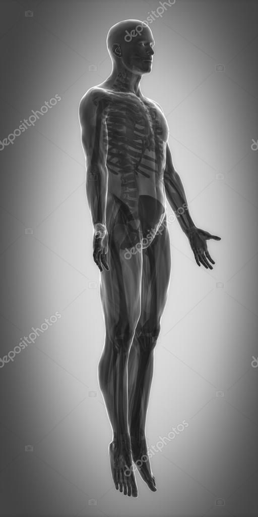 Muskeln Anatomie Karte — Stockfoto © CLIPAREA #88087276