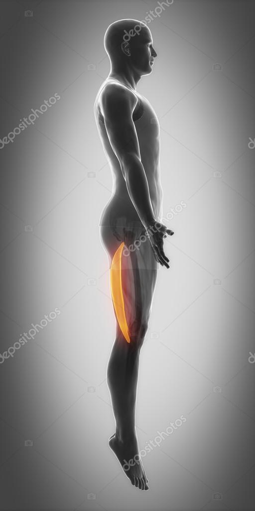 Mapa de anatomía de los músculos — Foto de stock © CLIPAREA #88087394