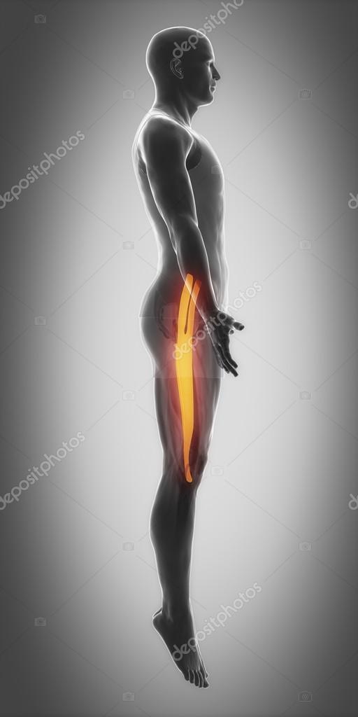 Mapa de anatomía de los músculos — Foto de stock © CLIPAREA #88087560