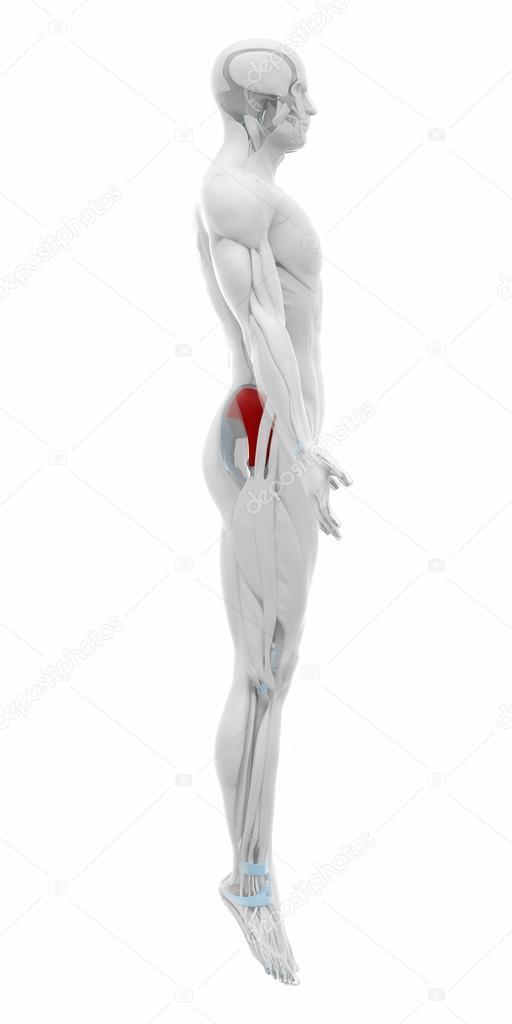 Mapa de anatomía de los músculos — Fotos de Stock © CLIPAREA #88087626